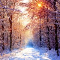Short Story:  A Walk Through Winter