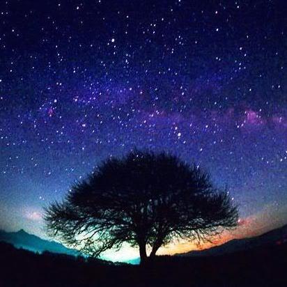 starstree